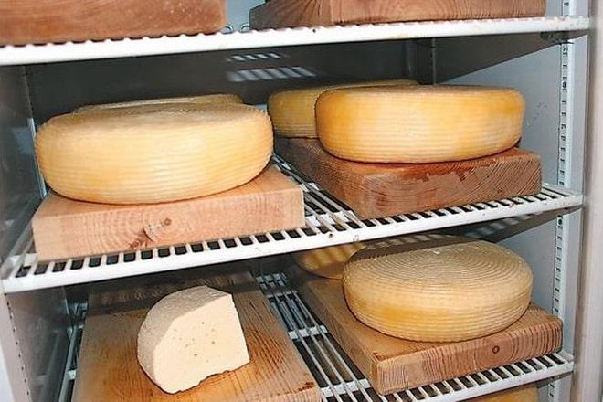 камера для созревания сыра своими руками